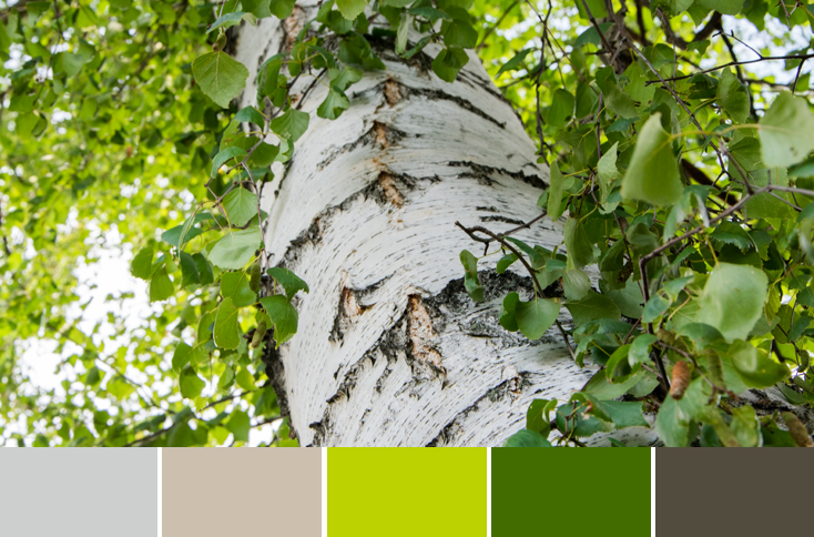 How to use color palettes in webdesign?